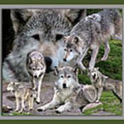 Montana Wolf Pack Art Print