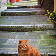 Montepulciano Cat Art Print