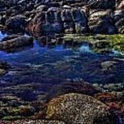 Monterey Pool Art Print