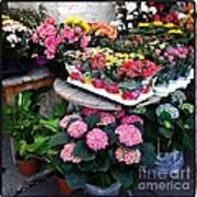 Montpellier Flower Shop Art Print