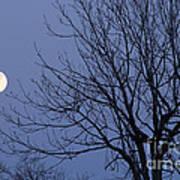 Moon And Bare Tree Art Print