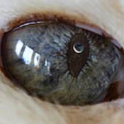 Moon In Cats Eye Art Print