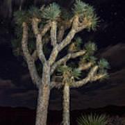 Moon Over Joshua - Joshua Tree National Park In California Art Print