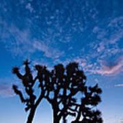 Moon Over Joshua - Joshua Trees During Sunrise In Joshua Tree National Park. Art Print