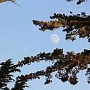 Moon Over Morro Bay Art Print