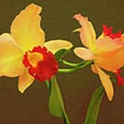 Moonlight Lady Orchid Art Print