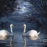 Moonlight Swim Art Print