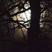 Moonlit Tree In The Forest Art Print