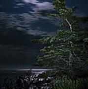 Moonlit Treescape Art Print