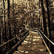 Moores Creek Battlefield Nc Swamp Walk  Art Print