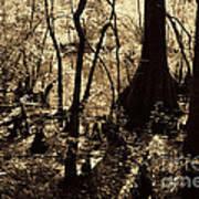 Moores Creek Swamp Art Print