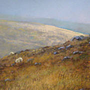 Moorland Sheep Art Print