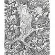 Moose Antler Shed Art Print by Kenneth or Susan Posselt