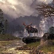 Moose In The Adirondacks Art Print