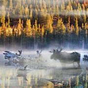 Moose Lake Art Print