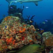 Moray Reef Art Print