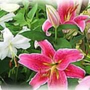 More Lilies Art Print by Victoria Sheldon