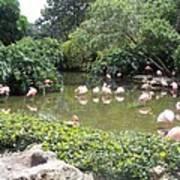 More Pink Flamingos Art Print
