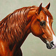 Morgan Horse - Flame Print by Crista Forest