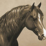 Morgan Horse Painting In Sepia Art Print by Crista Forest