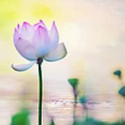 Morning Breeze And Beautiful Lotus Art Print