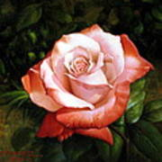 Morning Dew On The Rose Faded Art Print