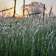 Morning Dew - View Through The Grass Art Print
