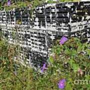 Morning Glories And Crab Traps Art Print by Theresa Willingham