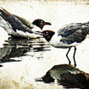 Morning Gulls - Seagull Art By Sharon Cummings Art Print by Sharon Cummings