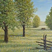 Morning Meadow Art Print