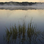 Morning Mist At Sunrise Art Print