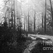 Morning Mist In Monochrome Art Print