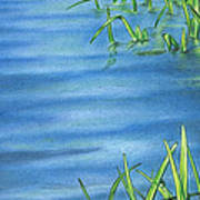 Morning On The Pond Art Print