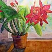 Morning Orchids Art Print