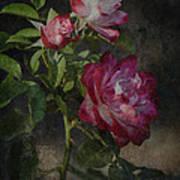 Morning Roses Art Print