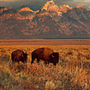 Morning Travels In Grand Teton Art Print by Sandra Bronstein