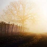 Morning Vineyard Art Print by Shannon Beck-Coatney