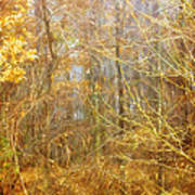 Landscape - Morning Walk In The Woods - 2 Art Print
