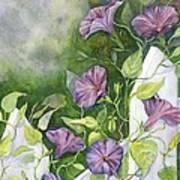 Mornings Glory Art Print