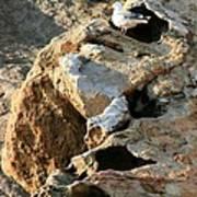 Morro Rock Nesting Art Print