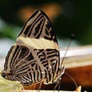 Mosaic Butterfly Art Print