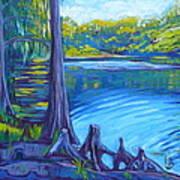 Moss And Cypress Art Print