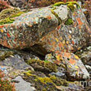 Moss And Lichens In The Scottish Highlands Art Print