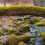 Moss Bridge Art Print