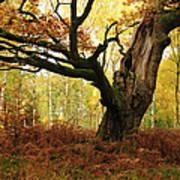 Moss Covered Ancient Hollow Oak Tree In Art Print