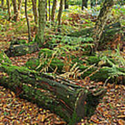 Moss Covered Logs On The Forest Floor Art Print