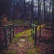 Moss Covered Path Art Print