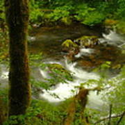 Moss Covered Trees Foregound Eagle Creek Art Print