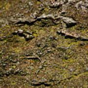 Moss On Rock Art Print