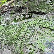 Moss Rock Art Print